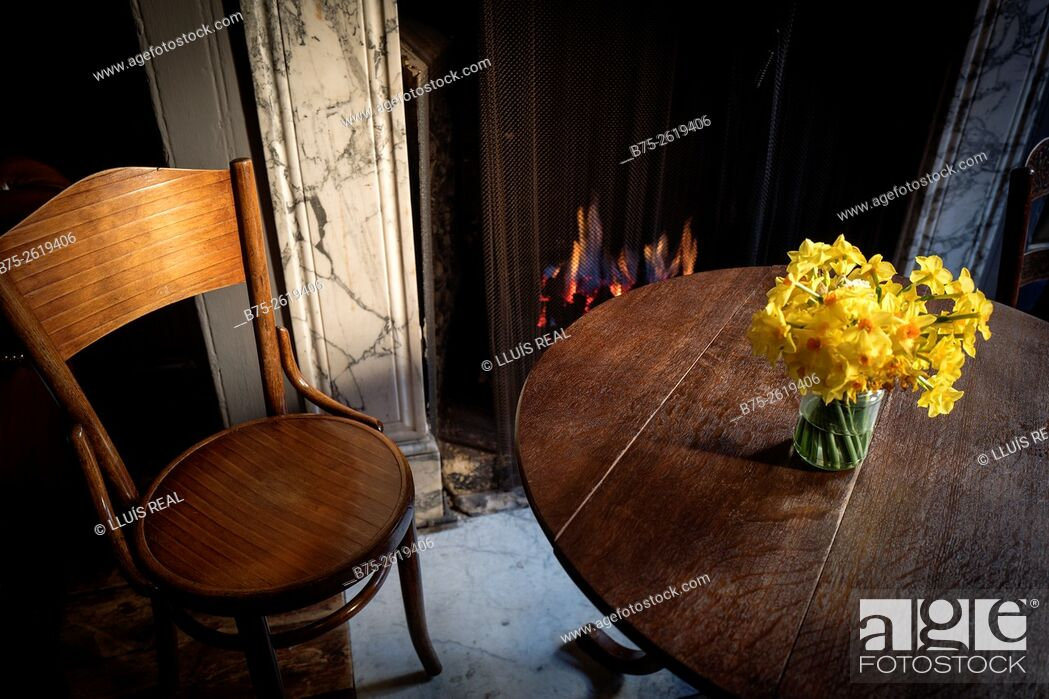 Stock Photo: Room of a house, with an old table and a bouquet of yellow daffodils on it, Thonet chairs, a lighted fire place in the background and an old wooden floor.