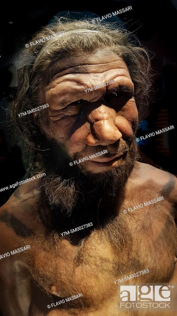 Stock Photo: Human evolution gallery . Model of male Homo neanderthalensis, Natural History Museum, London, England, UK. This image could have imperfections as itâ.