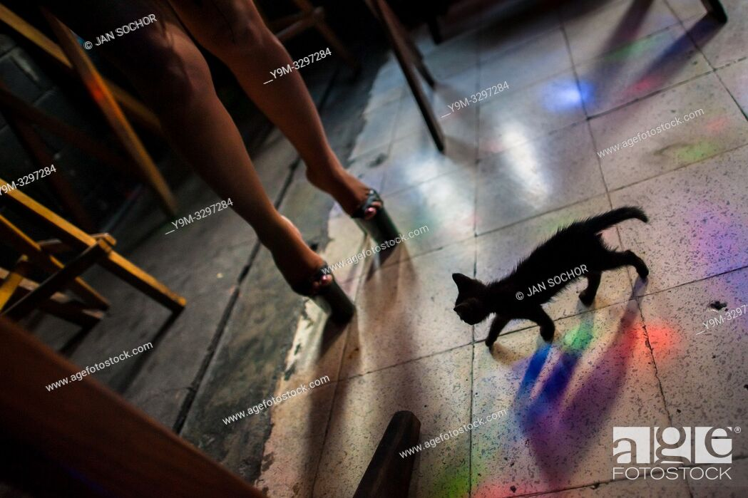 Stock Photo: A pet kitten walks next to a sex worker wearing high heels shoes in a sex club in San Salvador, El Salvador, 13 November 2016. Sex workersâ.