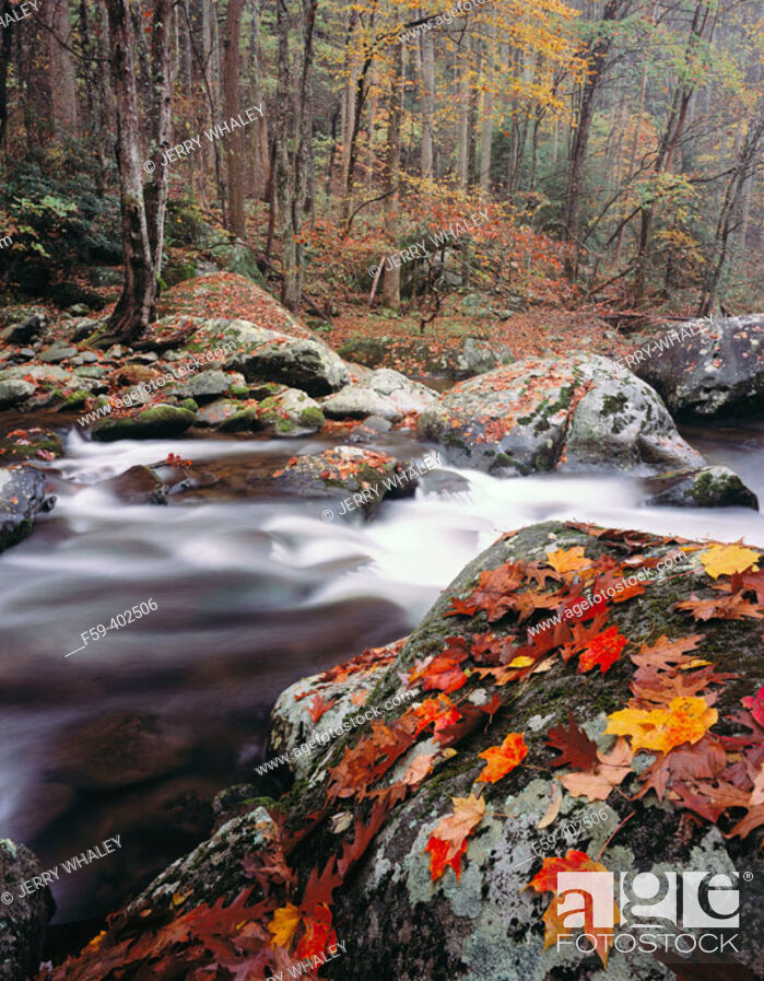 Stock Photo: Autumn, Tremont, Great Smoky Mountains National Park. Tennessee, USA.