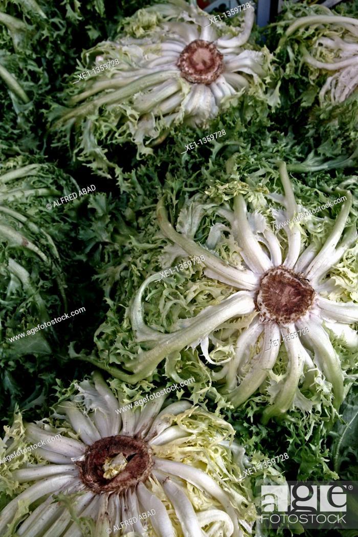 Stock Photo: lettuce.
