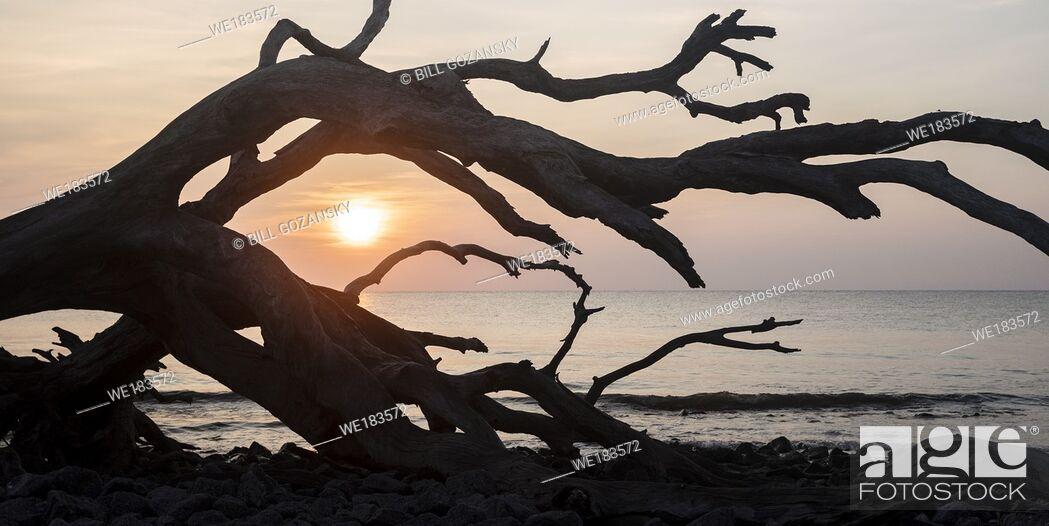 Stock Photo: Sunrise on Driftwood Beach - Jekyll Island, Georgia, United States.