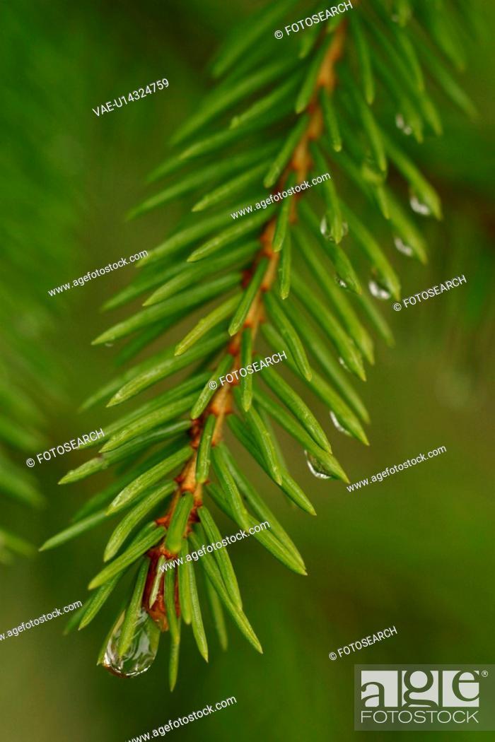 Stock Photo: drop, droplet, moisture, water, vegetation, wild.