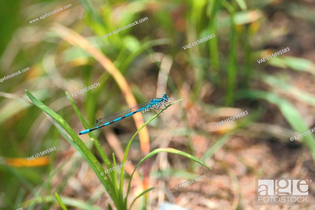 Stock Photo: anthropods, bug, arthropod, animal, dragonfly, anthropoda, insect.