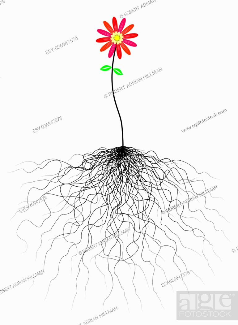 Stock Vector: Editable vector flower illustration with tangled roots.