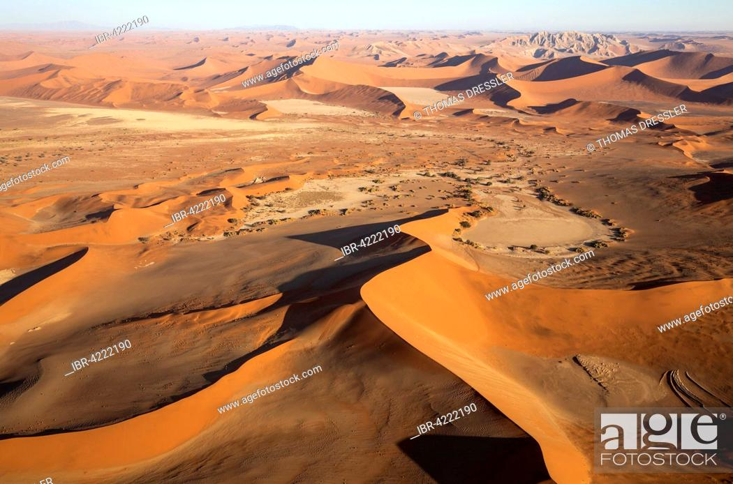Stock Photo: Sand dunes in the Namib Desert, Witberg at the top right, 426m, granite massif in the centre of the Namib Desert, camel thorn trees (Acacia erioloba).