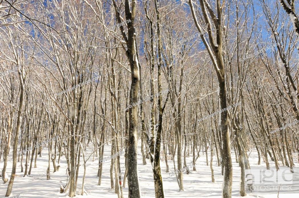 Stock Photo: Peredovoe  Crimea  Ukraine Wood.