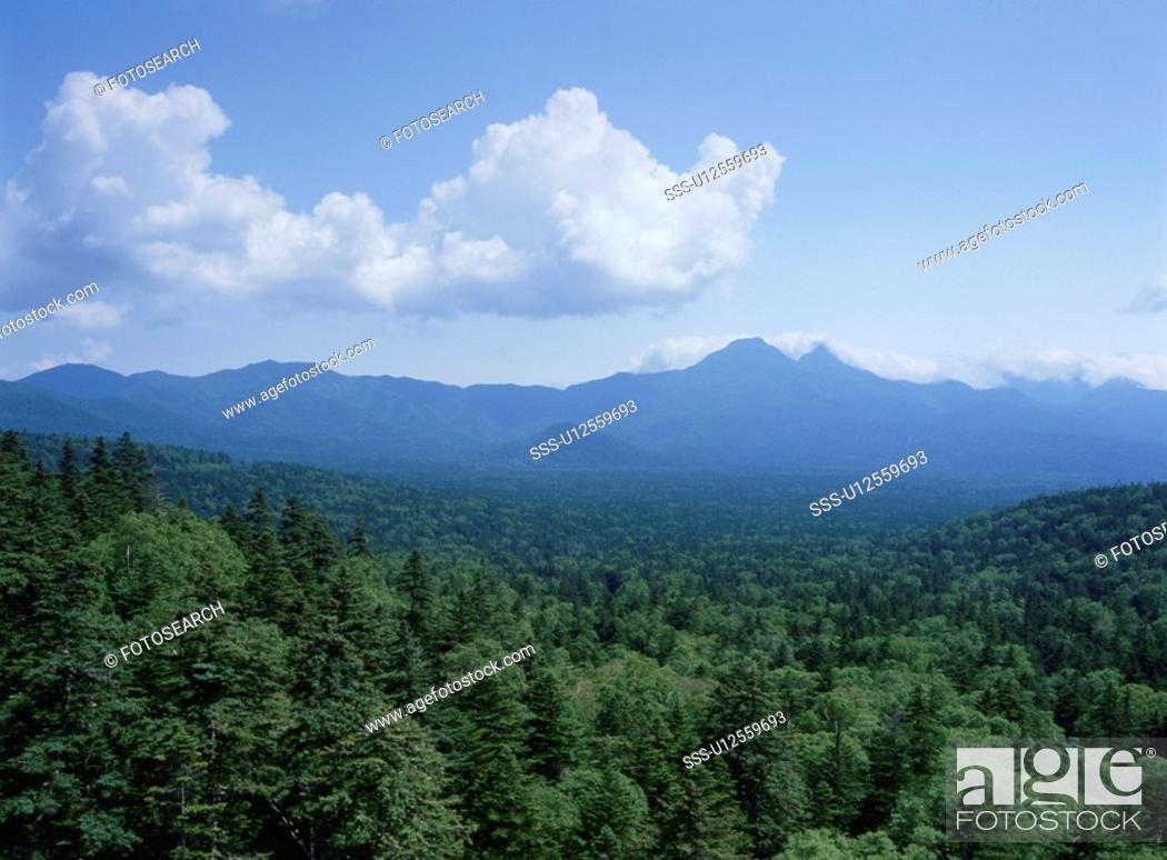 Stock Photo: A Primeval Forest And A Blue Sky.