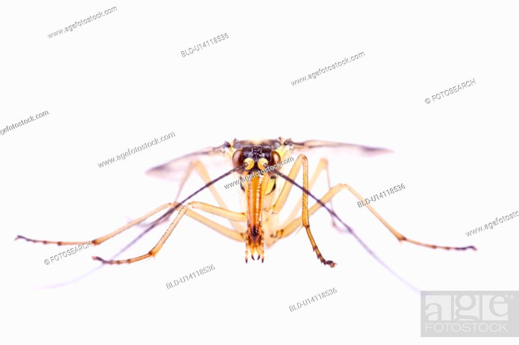 Stock Photo: Close up of an insect.