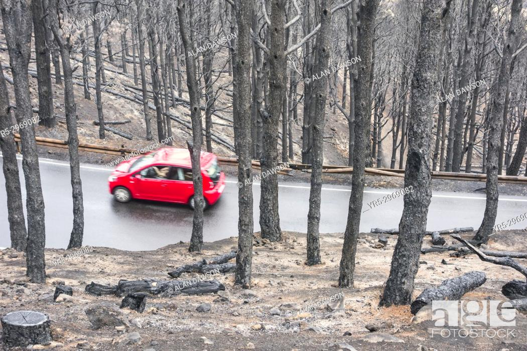 Stock Photo: A car drives on a mountain road a few days after huge forest fire in the mountain pine forests on Gran Canaria, Canary Islands, Spain.