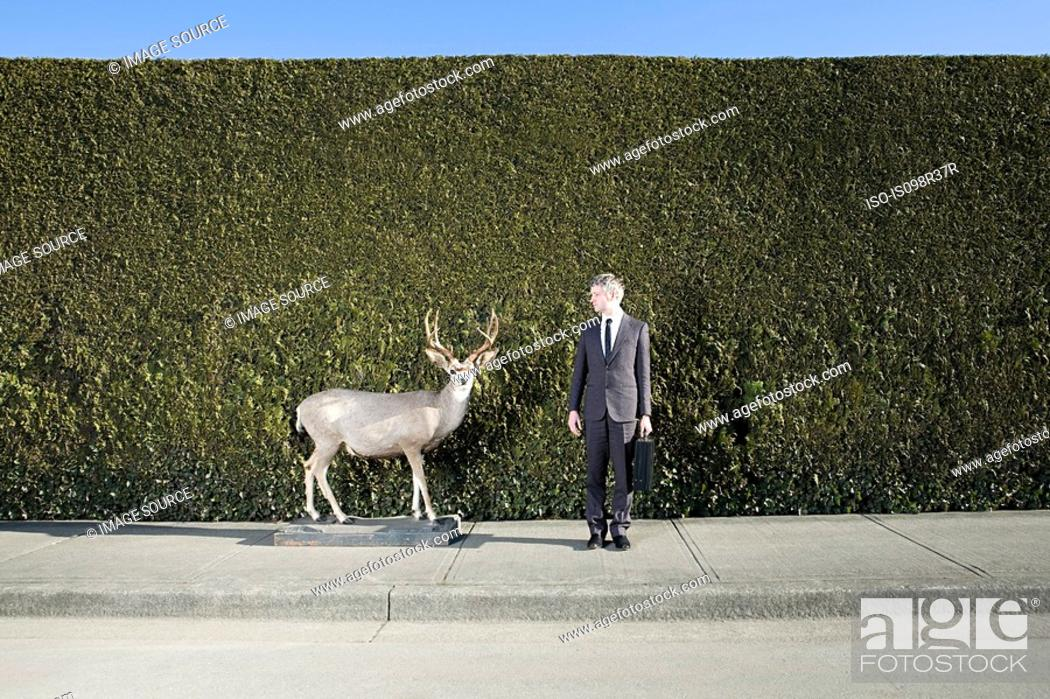 Stock Photo: Businessman and deer in front of hedge.