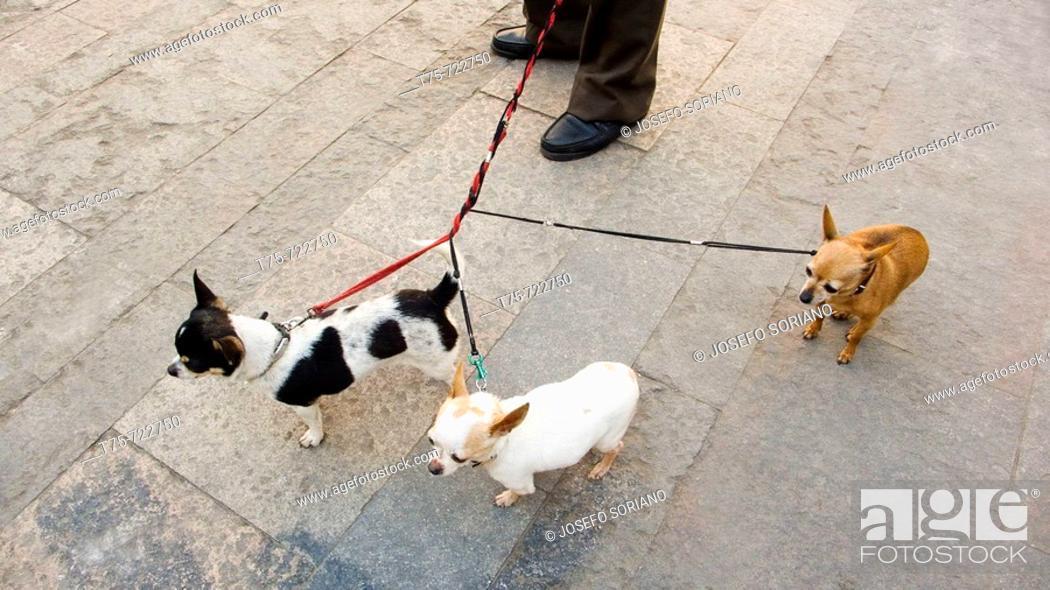 Stock Photo: Walking dogs.
