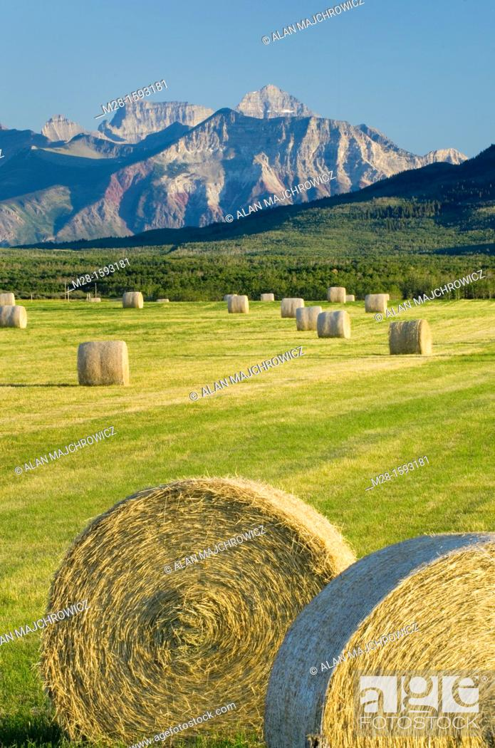 Photo de stock: Bales of hay in filed near Waterton Lakes National Park Alberta Canada.