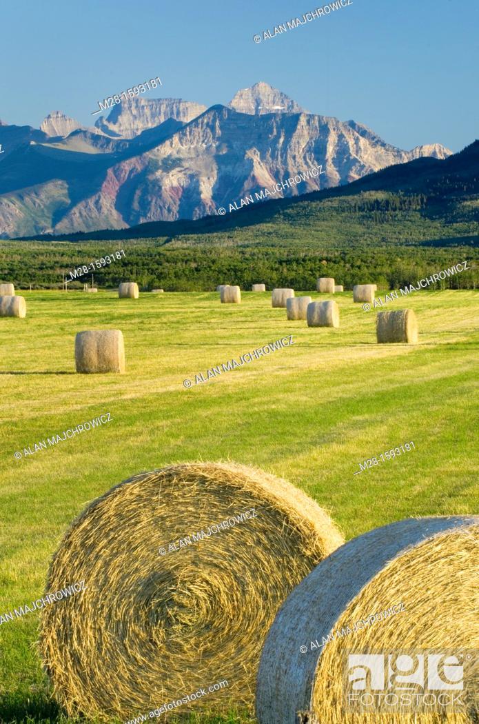 Stock Photo: Bales of hay in filed near Waterton Lakes National Park Alberta Canada.