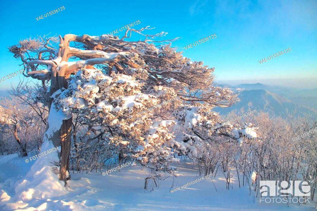 Stock Photo: scenery, winter, landscape, mountain, tree, scene, season.