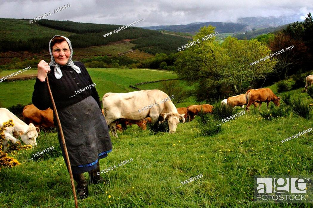 Imagen: A woman tending cows in the high A Fontaneira, Lugo.