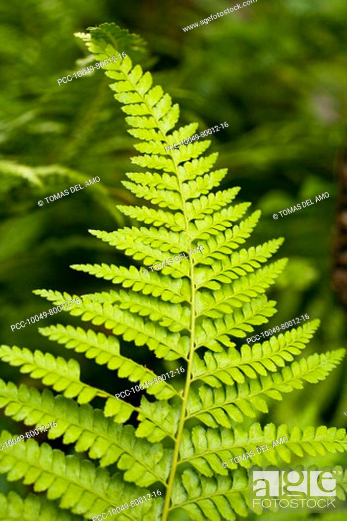 Stock Photo: Close-up of bright green fern.
