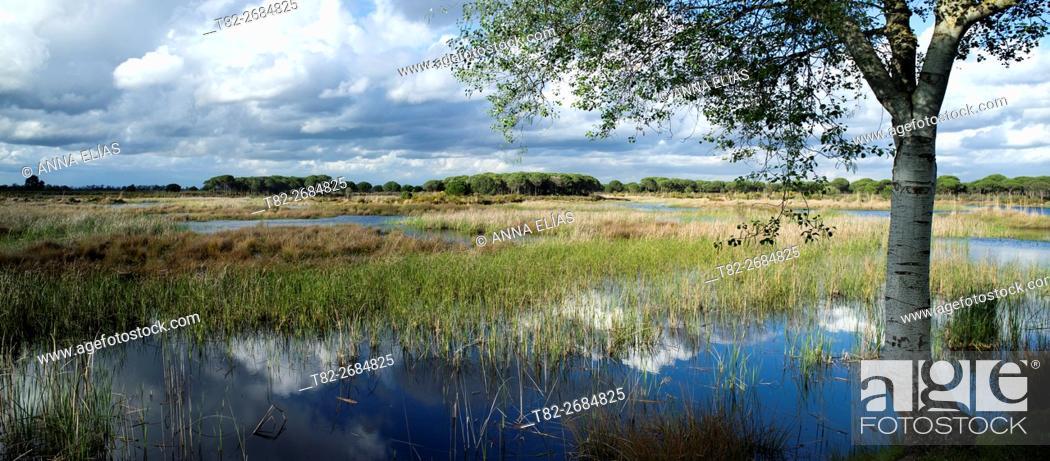 Stock Photo: Lagoon Nature Park Doñana, Huelva, Andalusia, Spain.