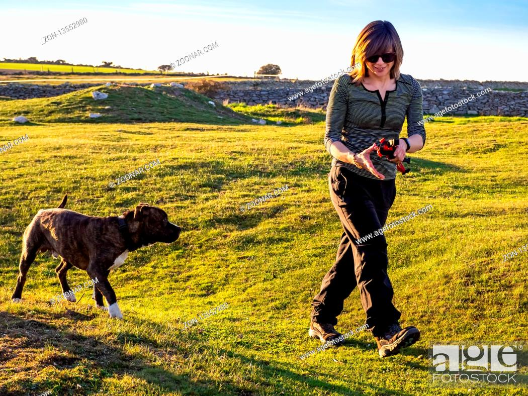 Stock Photo: An adult woman playing with a young dog of the American staffordshire breed in countryside in springtime.