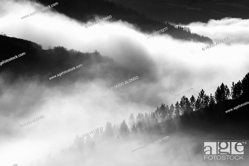Stock Photo: Pine forest. Ancares. Castilla y León. Spain.