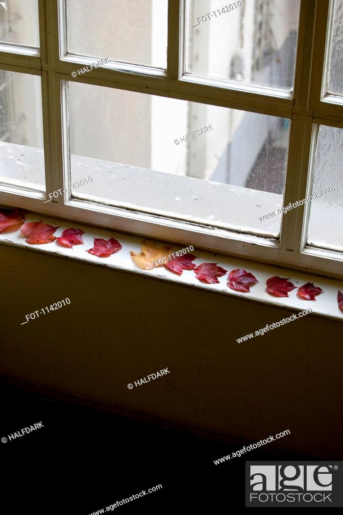 Stock Photo: Autumn leaves on a window sill.