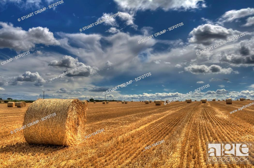 Imagen: Field of Wheat after harvesting in Leicestershire, England, UK.