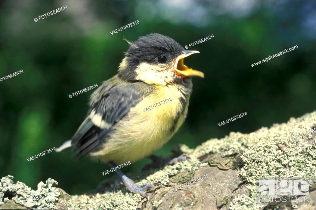 Stock Photo: bill, aves, Bernhard, beak, bawl, animals.