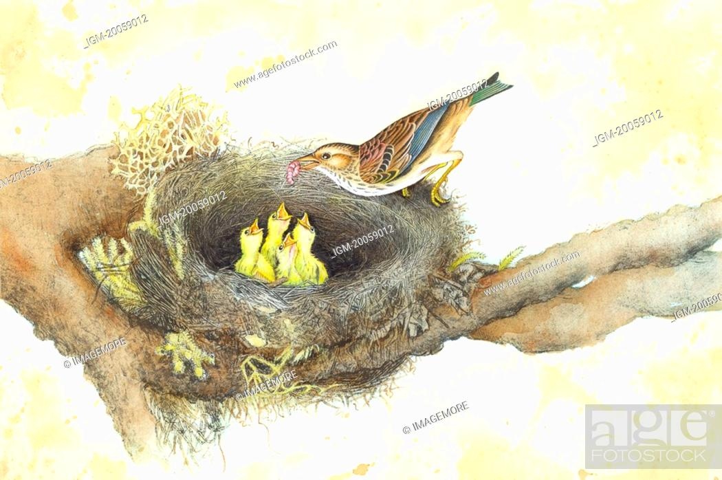 Stock Photo: Animal, Watercolor painting of a bird feeding young birds in the nest.