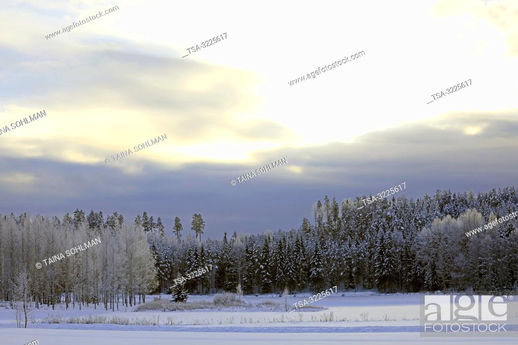 Stock Photo: Raasepori, Finland. January 27, 2019. Finland's winter weather gets record-breaking cold: .-38, 7 degrees Celsius in Sodankylä.
