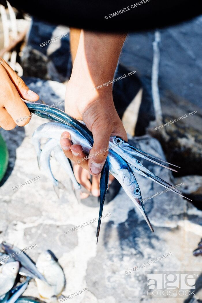 Stock Photo: fish just caught in the Mediterranean sea, needlefish in the hands of the fisherman.