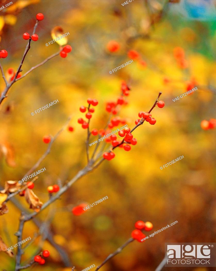 Stock Photo: nature, plants, tree, plant, film.