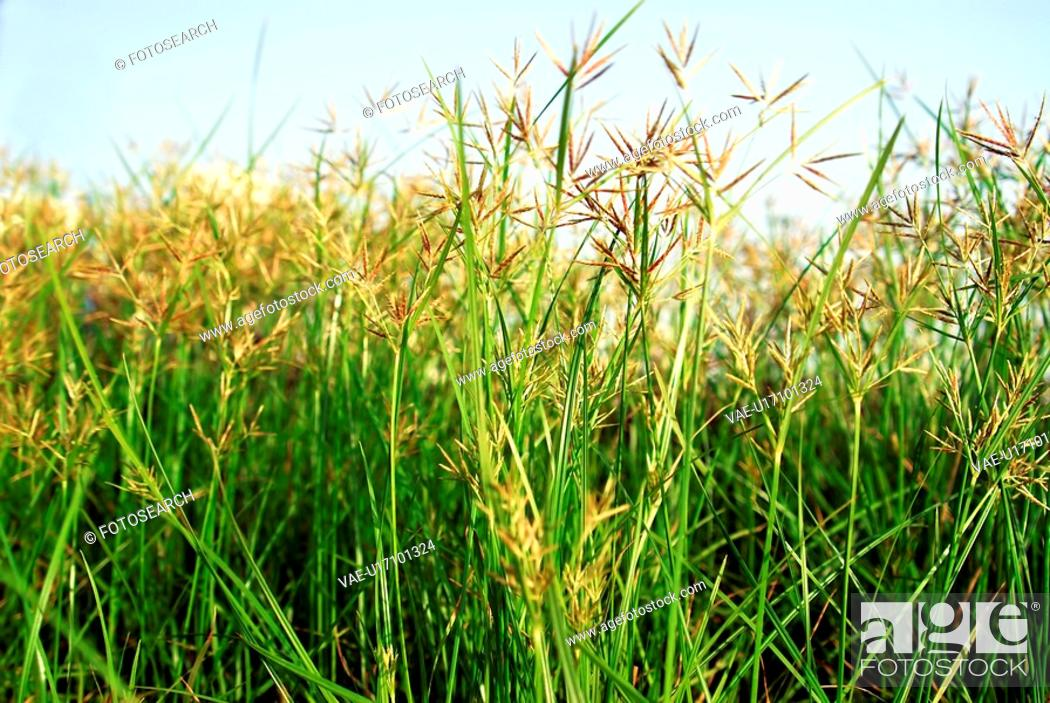 Stock Photo: flower, grass, green, plants, colourful, beautiful, macro.