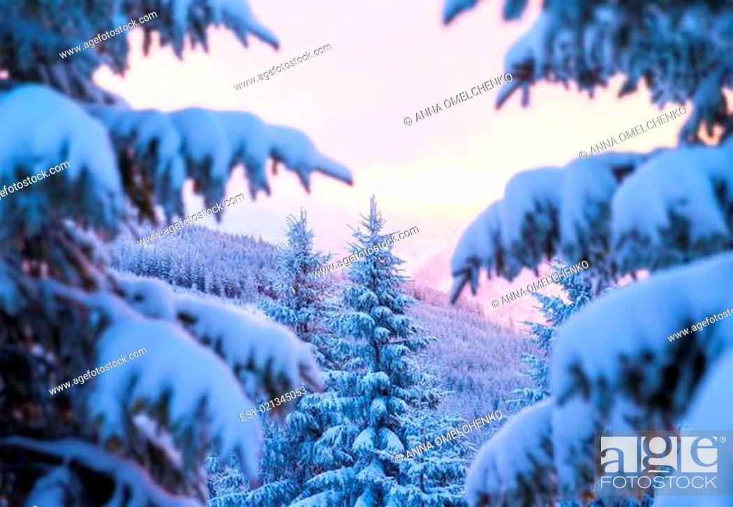 Stock Photo: Beautiful winter forest.