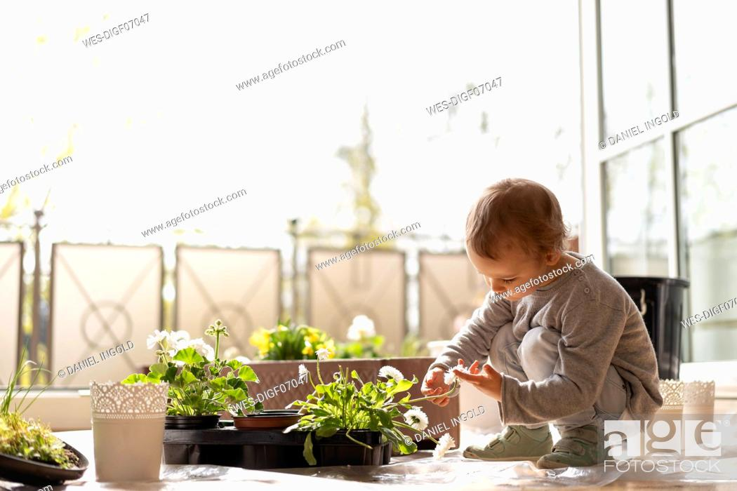 Stock Photo: Cutle little girl examining flower on balcony.