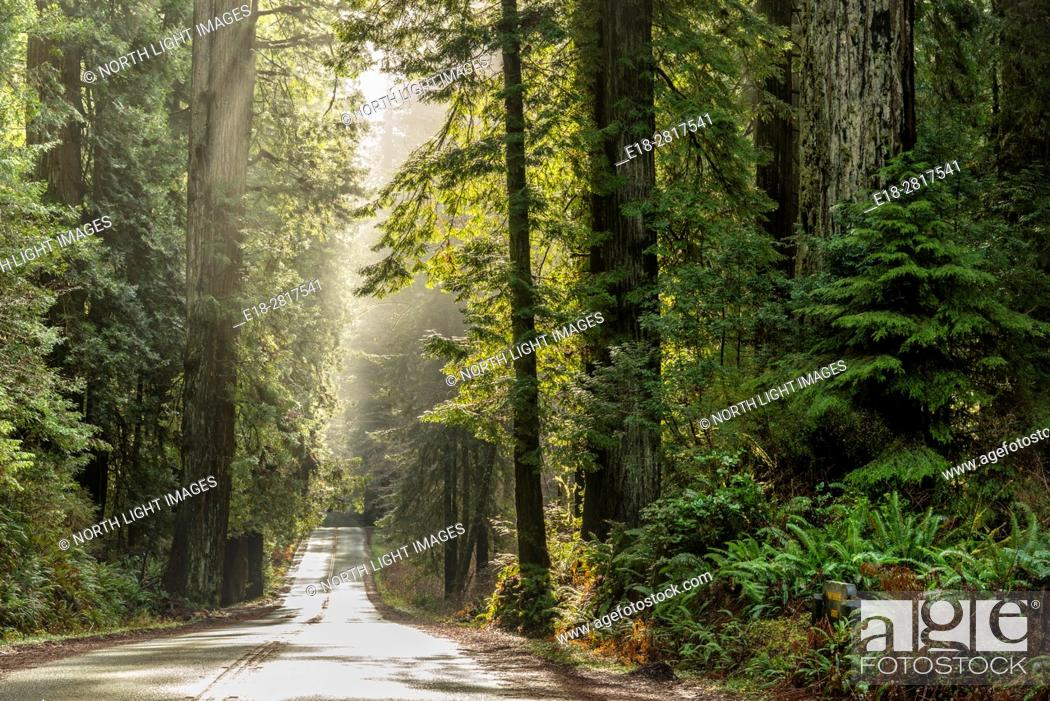 Imagen: USA, CA, Eureka, Hwy 101 through Redwood Forest National Park, north of town.