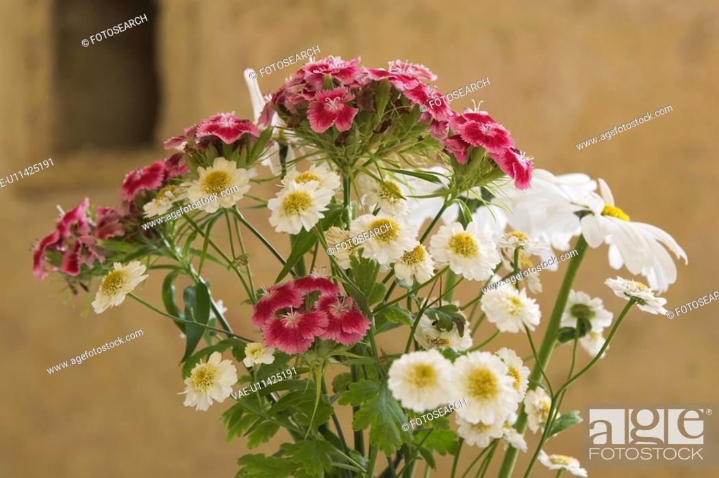 Stock Photo: Bloom, Petals.