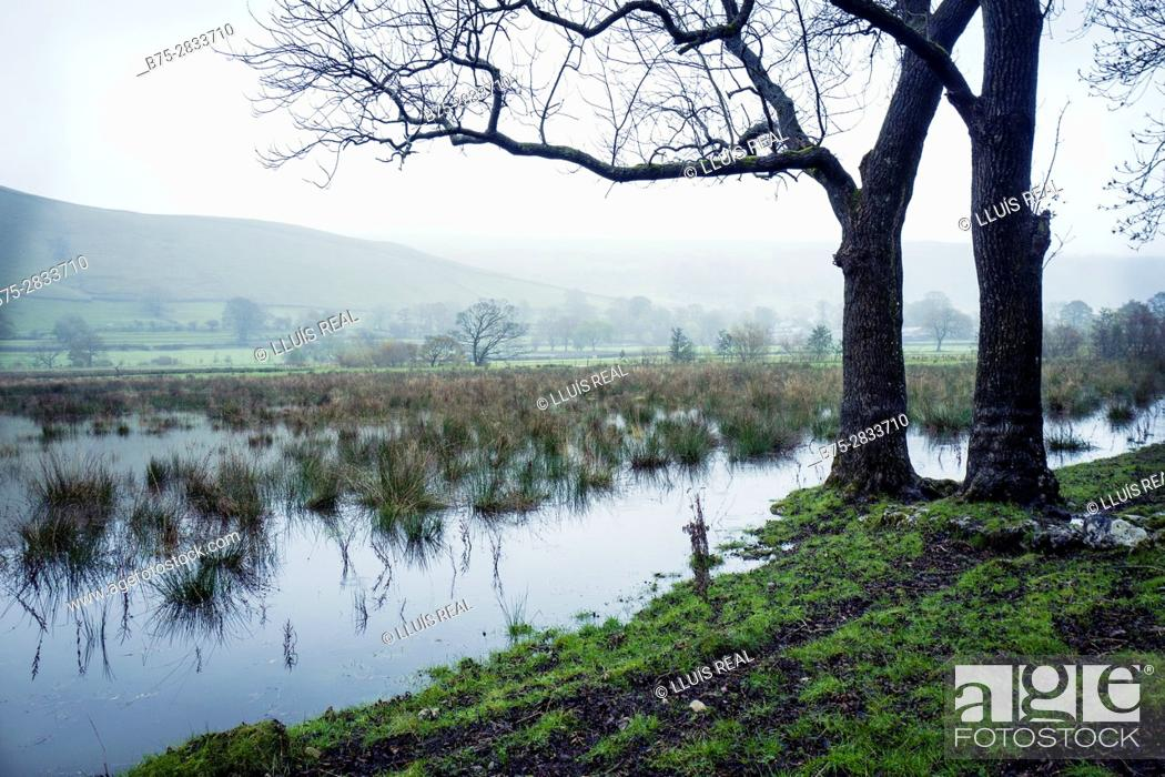 Stock Photo: Early morning rural landscape with mists, two trees and River Wharfe, Buckden North Yorkshire, Yorkshire Dales, Skipton, England, UK.