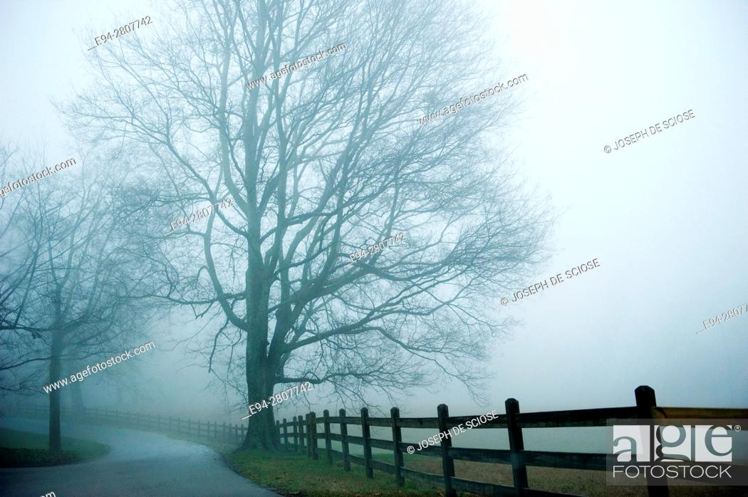 Stock Photo: Curving paved country road on a foggy day in the winter with trees and a fence line fading into the distance. Birmingham, Alabama.