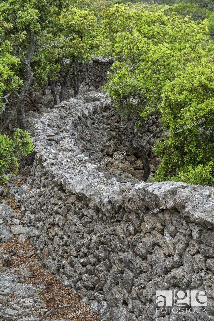 Imagen: muro tradicional de piedra - Pedre en Sec - Fita del Ram, Esporles, Paraje natural de la Serra de Tramuntana, Mallorca, balearic islands, Spain.