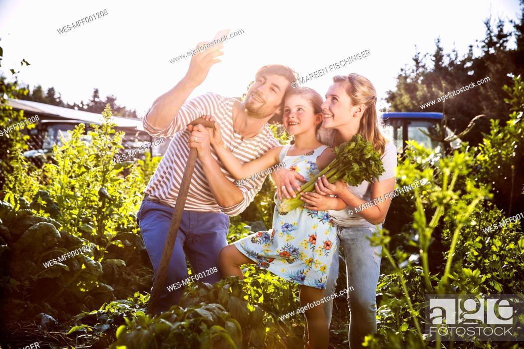 Stock Photo: Germany, Northrhine Westphalia, Bornheim, Family working in vegetable garden.