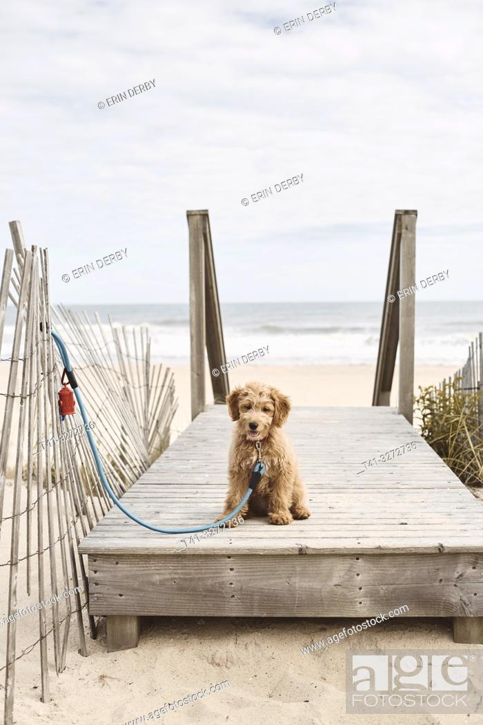 Stock Photo: A puppy at the beach.