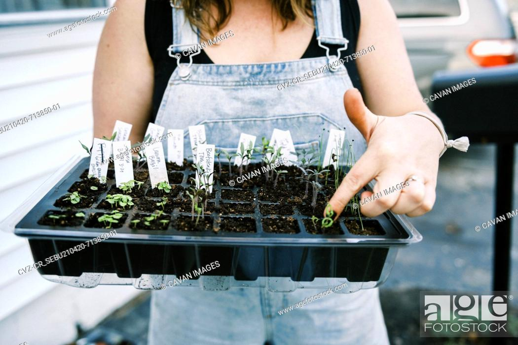 Stock Photo: A woman in a coverall holding up tray of started seedlings in her yard.