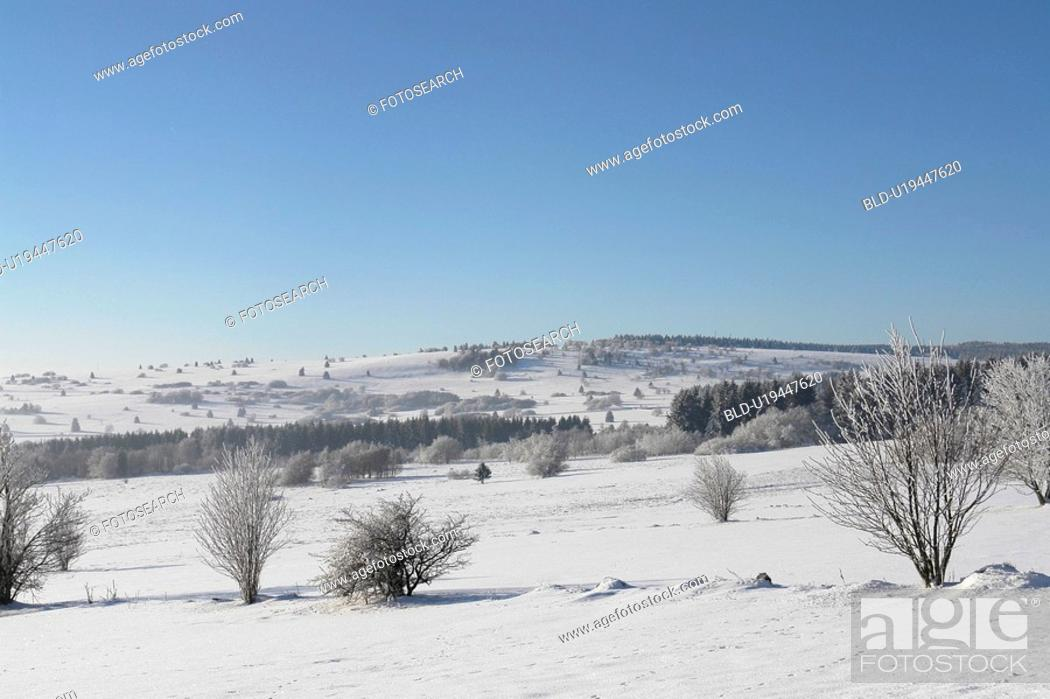 Stock Photo: cold, field, forest, FRG, FRG/Bavaria, frosty, hill.