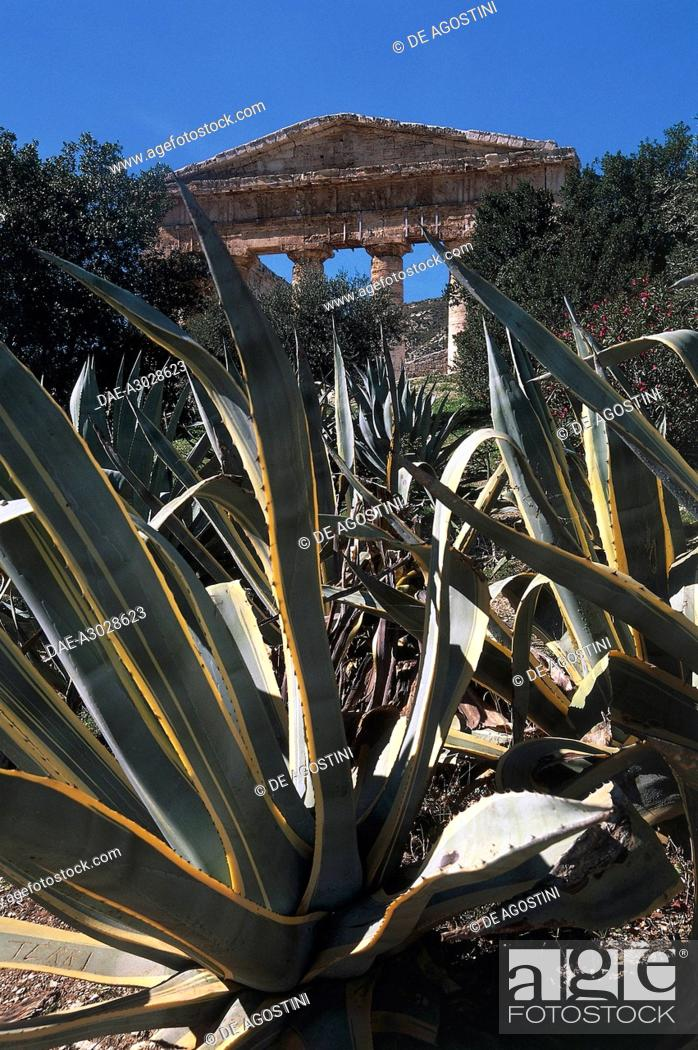 Stock Photo: Agave plants in foreground, Asparagaceae, and Temple of Segesta in the background, Sicily region, Italy.