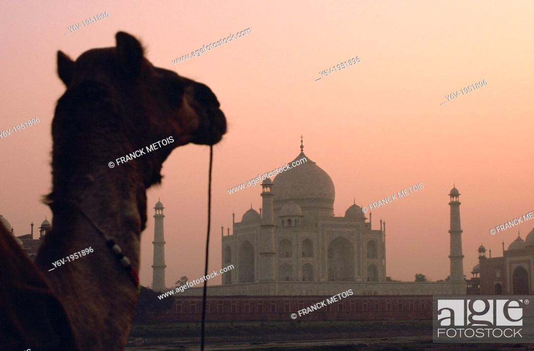 Stock Photo: Taj mahal at sunrise. In the foreground, a dromedary. Agra, India.