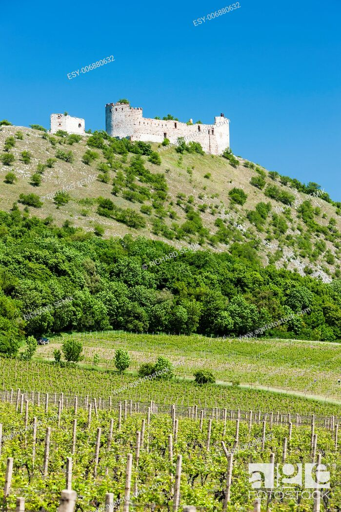 Stock Photo: ruins of Devicky Castle with vineyards, Czech Republic.