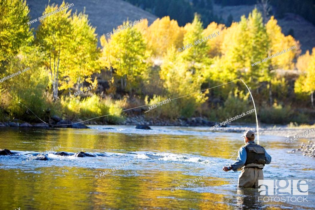 Stock Photo: Man fly fishing on the Bigwood River, Sun Valley, Idaho, USA.