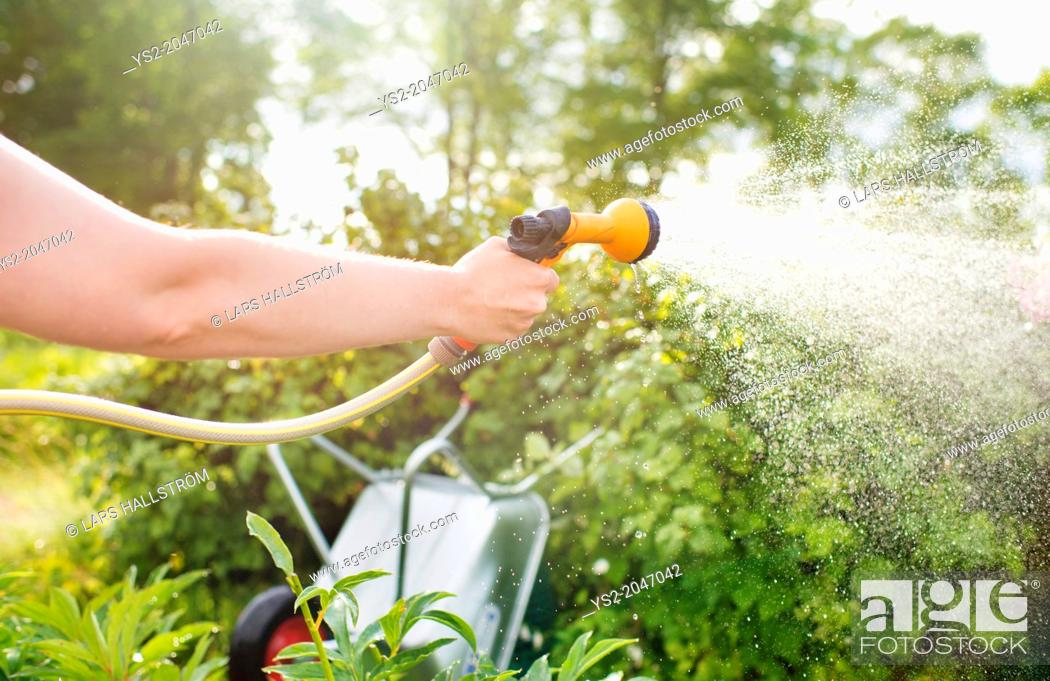 Stock Photo: Woman watering plants with garden hose and hand held sprinkler.