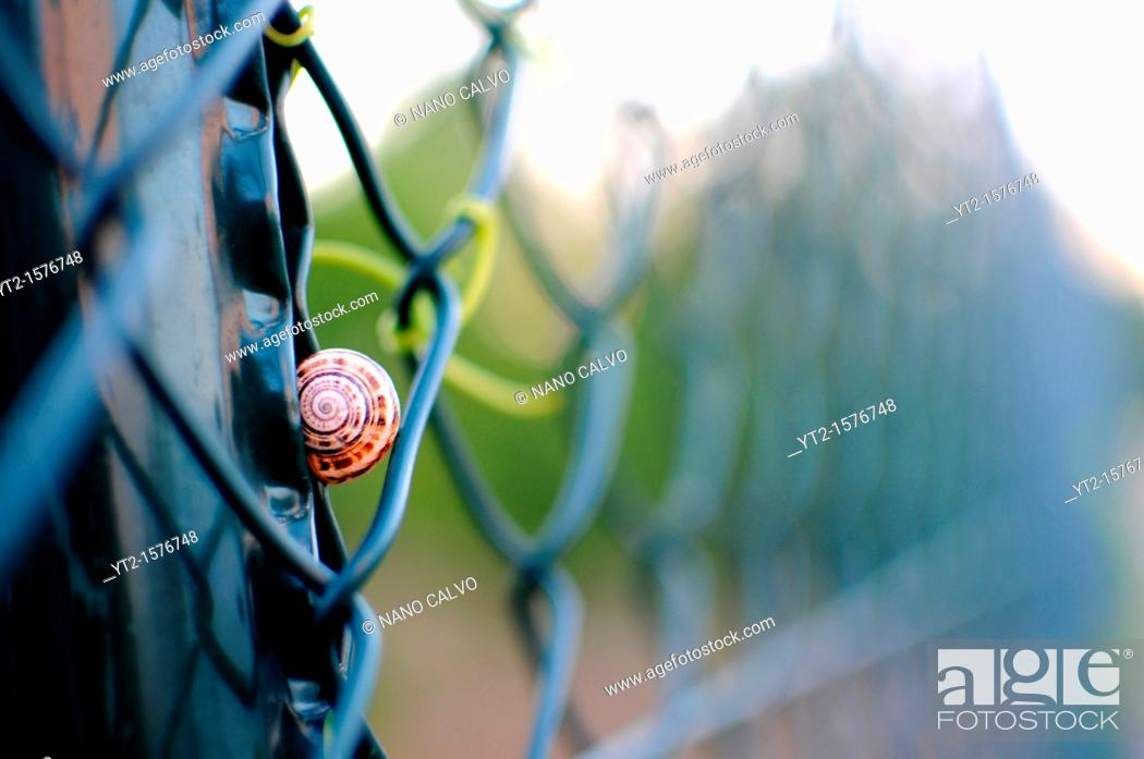 Stock Photo: Snail finds rest in a fence.