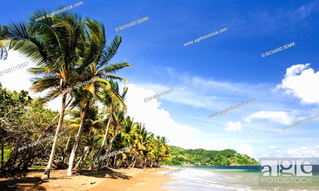 Stock Photo: Pinfold Bay, Tobago.